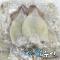 생물오징어 동결 6K 18~22마리